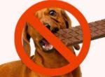 suns apēdis šokolādi
