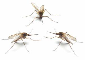 kā tikt vaļā no odiem